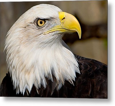 Eagle Power Metal Print by William Jobes
