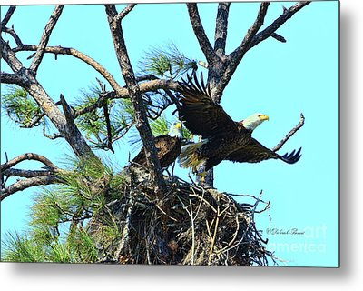 Metal Print featuring the photograph Eagle Series The Nest by Deborah Benoit
