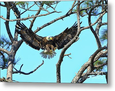 Metal Print featuring the photograph Eagle Series Wings by Deborah Benoit