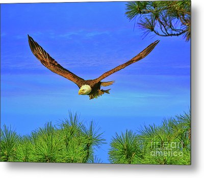 Metal Print featuring the photograph Eagle Series Through The Trees by Deborah Benoit