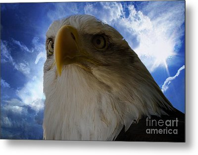 Eagle Metal Print by Sherman Perry