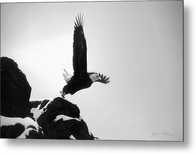 Metal Print featuring the photograph Eagle Takeoff At Adak, Alaska by John A Rodriguez