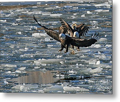 Eagles On Ice Metal Print