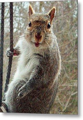 Earl The Squirrel Metal Print by Robert Orinski