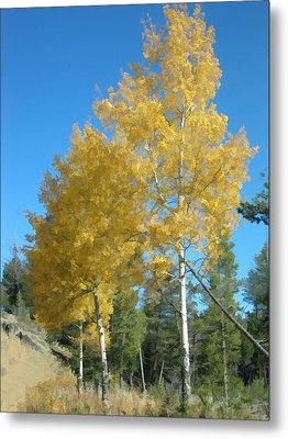 Early Autumn Aspens Metal Print by Gary Baird