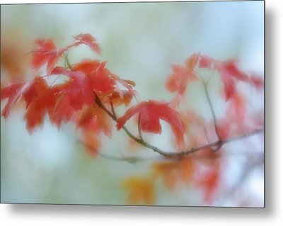 Metal Print featuring the photograph Early Autumn by Diane Alexander