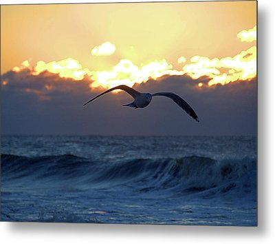 Early Bird Metal Print by Newwwman
