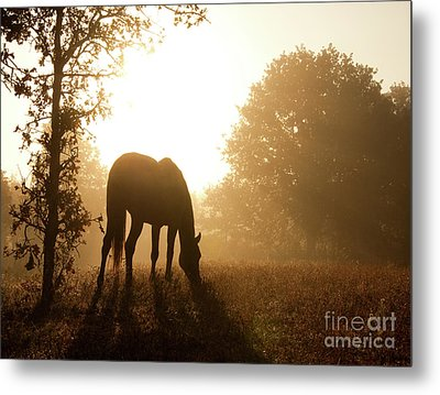Early Fall Morning Metal Print