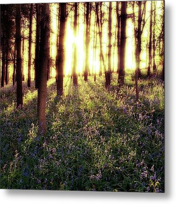 Early Morning Amongst The Metal Print by John Edwards