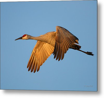 Metal Print featuring the photograph Early Morning Flight by Gerry Sibell