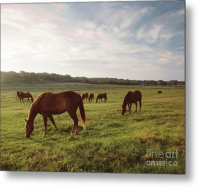 Early Morning Graze Metal Print by A New Focus Photography