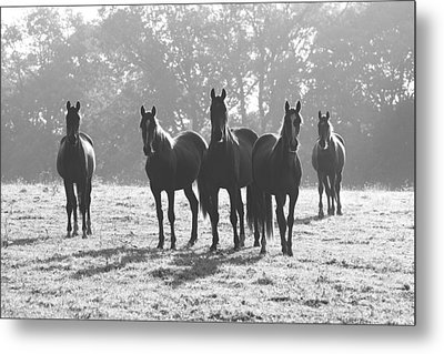 Early Morning Horses Metal Print