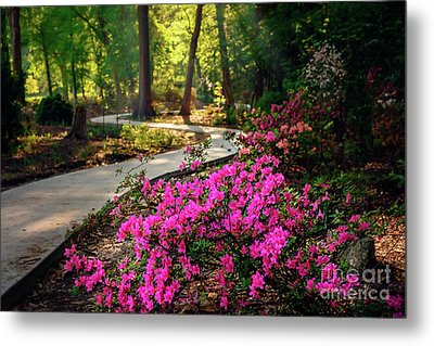 Early Morning In Honor Heights Park Metal Print by Tamyra Ayles