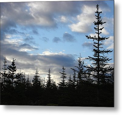 Early Morning Light Metal Print by Marilynne Bull
