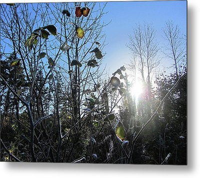 Early Morning Sun Metal Print