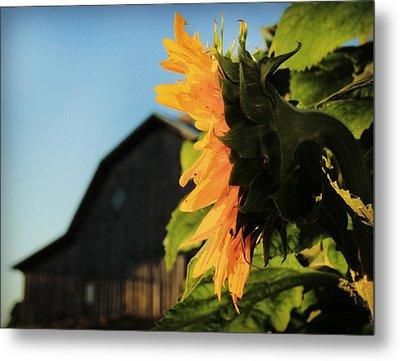 Metal Print featuring the photograph Early One Morning by Chris Berry