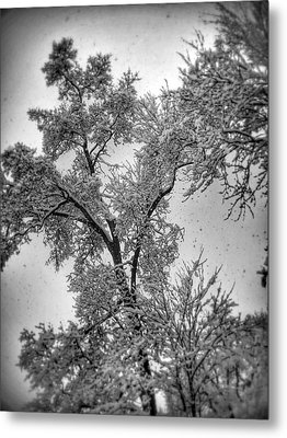 Metal Print featuring the photograph Early Snow by Steven Huszar