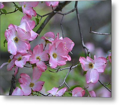 Early Spring Color Metal Print by Kathy Eickenberg