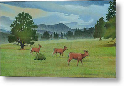 Early Spring Evergreen Metal Print