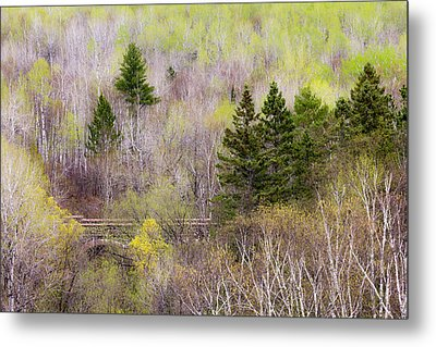 Early Spring Palette Metal Print