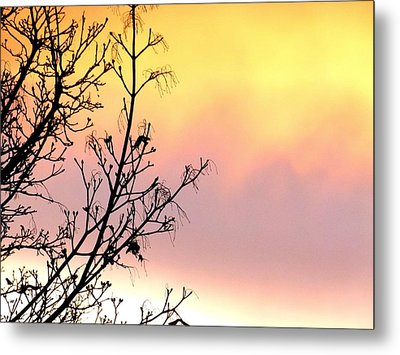 Metal Print featuring the photograph Early Spring Sunset by Will Borden