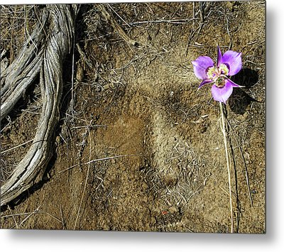 Metal Print featuring the photograph Earth Memories-desert Flower # 1 by Ed Hall