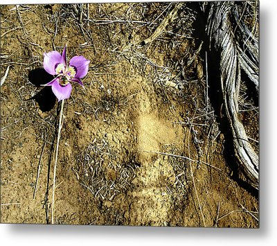 Metal Print featuring the photograph Earth Memories - Desert Flower # 2 by Ed Hall