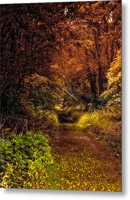 Earth Tones In A Illinois Woods Metal Print by Thomas Woolworth