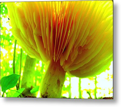 Earth View Metal Print by Shirley Sirois