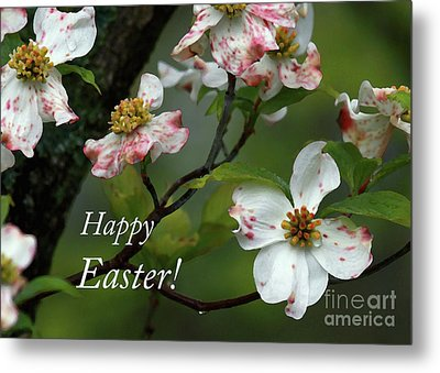 Metal Print featuring the photograph Easter Dogwood by Douglas Stucky