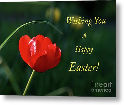 Metal Print featuring the photograph Easter Tulip by Douglas Stucky