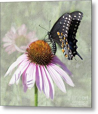 Eastern Black Swallowtail And Echinacea  Metal Print by Barbara McMahon