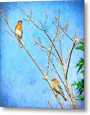 Eastern Bluebird Couple Metal Print