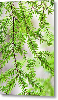 Metal Print featuring the photograph Eastern Hemlock Tree Abstract by Christina Rollo