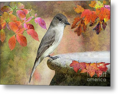 Metal Print featuring the photograph Eastern Phoebe In Autumn by Bonnie Barry
