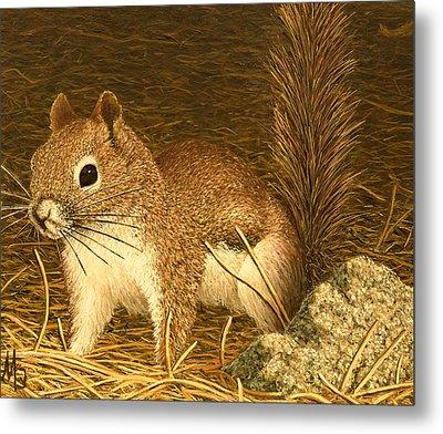 Eastern Pine Squirrel Metal Print