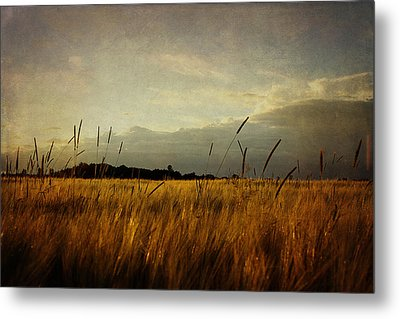 Metal Print featuring the photograph Eastern Wheat by Gary Smith