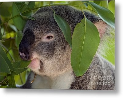 Eat Your Greens Metal Print by Mike  Dawson
