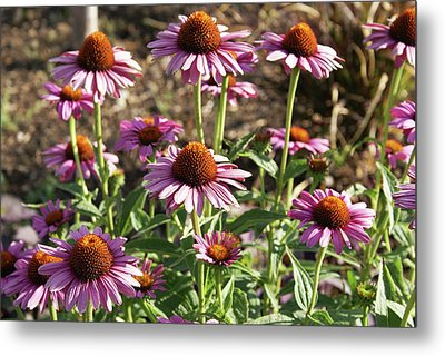Metal Print featuring the photograph Echinacea by Cynthia Powell