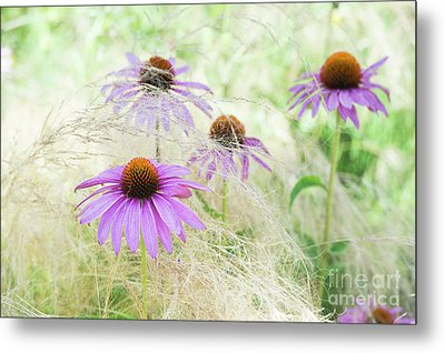 Echinacea In The Grass Metal Print by Tim Gainey