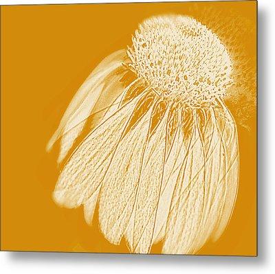Echinacea Metal Print by Linde Townsend