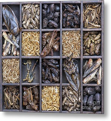 Edible Insects Metal Print by Tim Gainey
