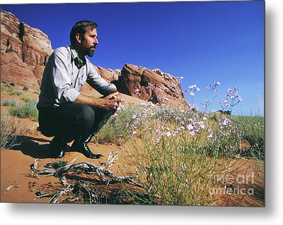 Edward Abbey, Author Of Desert Solitaire, Shown Here In The Dese Metal Print