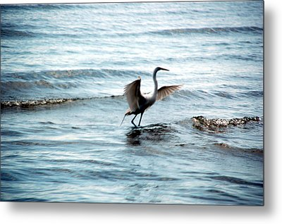 Metal Print featuring the photograph Egret At Sunset by Kathleen Stephens