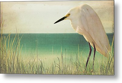 Egret In Morning Light Metal Print