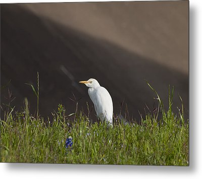Metal Print featuring the photograph Egret In The City by Joshua House