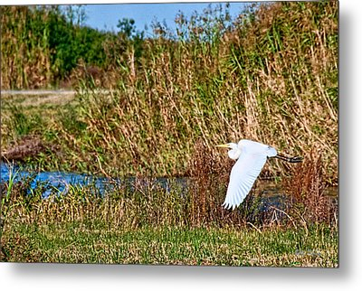 Egret In The Marsh Metal Print by Bill Perry
