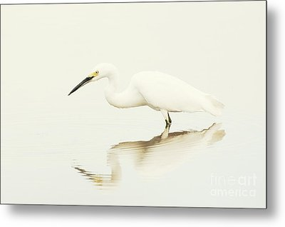 Egret In Vanilla Tones Metal Print by Ruth Jolly