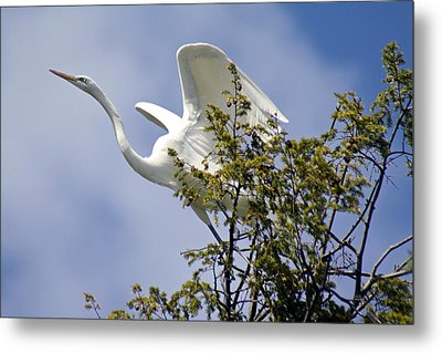 Egret On Angels Wings Metal Print