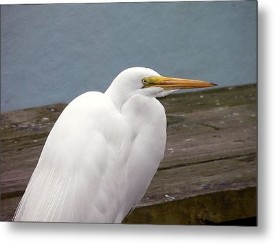 Egret On The Dock Metal Print by Al Powell Photography USA